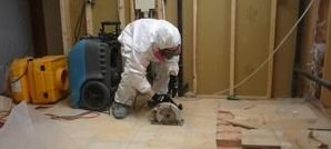 Water and Mold Removal In Flooring